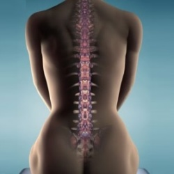 Krémy na kĺby, svaly a chrbticu