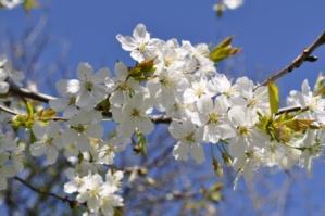 jarne_kvety